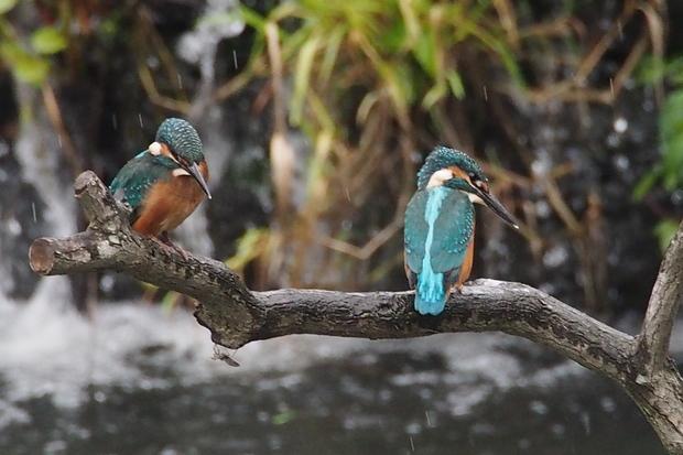 20160919 若鳥と.jpg