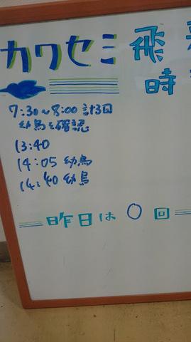 カワセミ飛来ボード.JPG