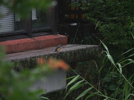 テラスで休憩の若鳥2 80%.jpg