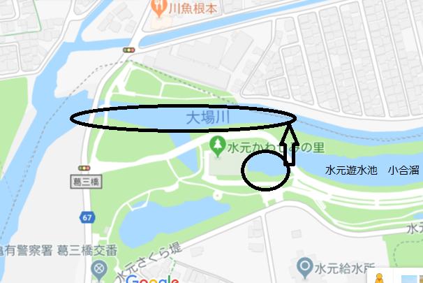 ヒナの行方.png