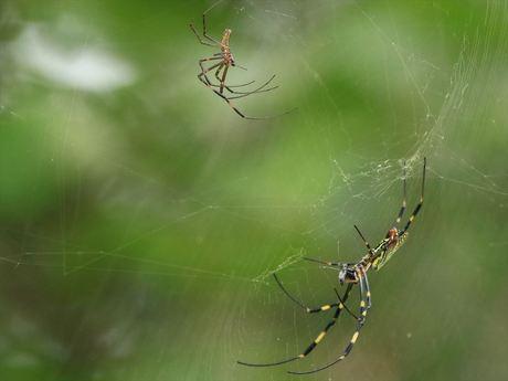 夫婦の蜘蛛_R.jpg