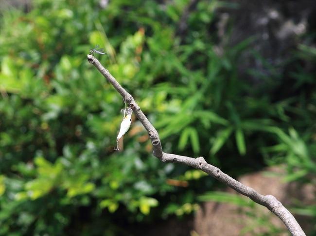 止まり木のルアー66_R.jpg