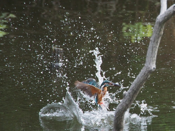 水から出て.jpg