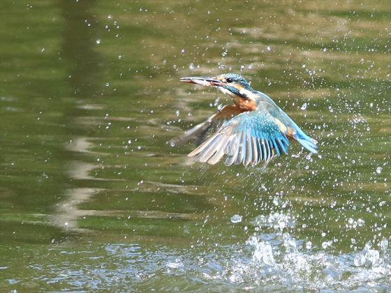 水面飛び出し3_R.jpg