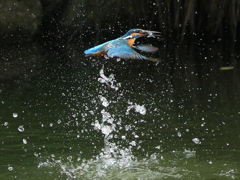 水面飛び出し50_R.jpg