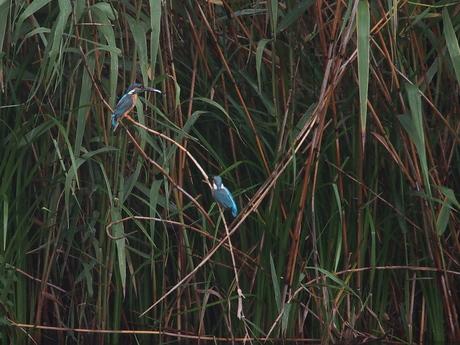 葦原の二人.jpg