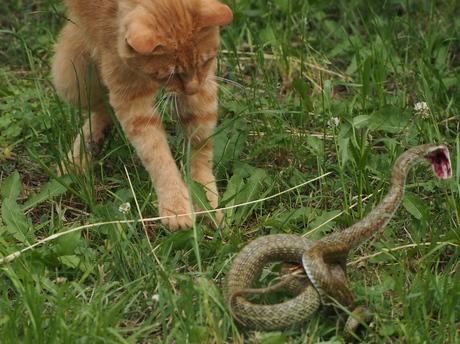 P6020536もだえる蛇.jpg