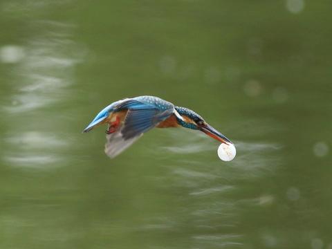 kingfisher's egg.jpg